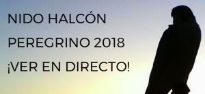 Nido Halcón Peregrino Alcalá Henares Torre Garena
